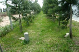 cerco-forestal-perimetral